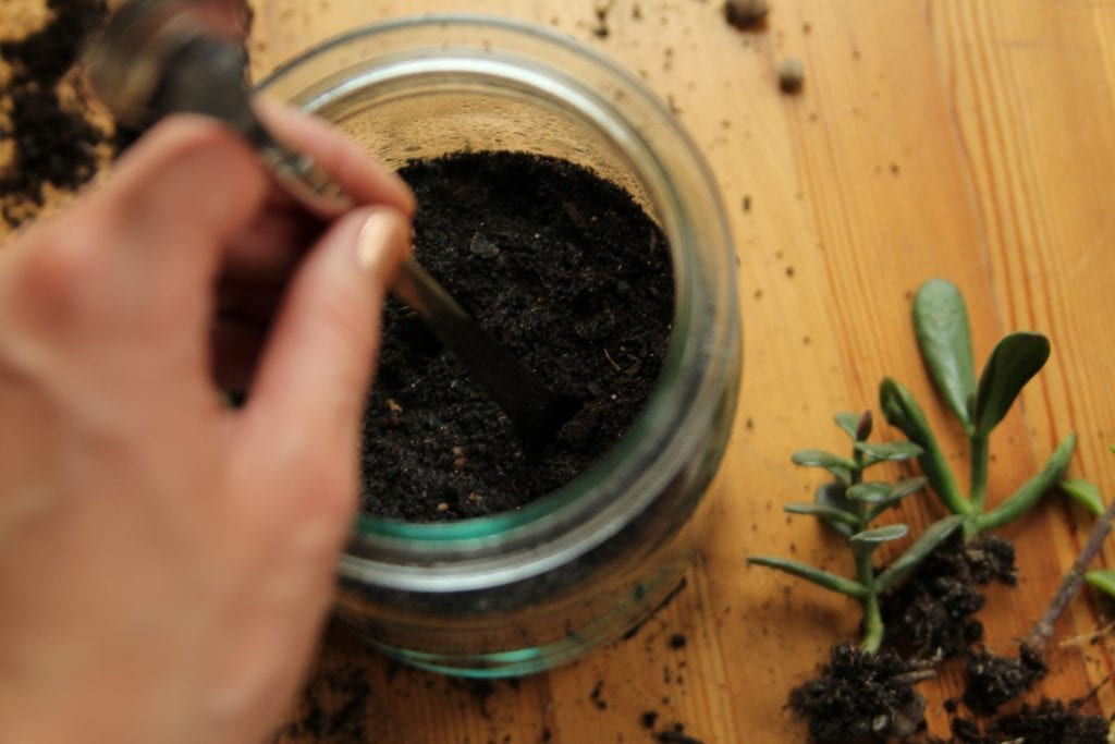 Dzikie Twory - przygotowywanie otworów w ziemi pod roślinki
