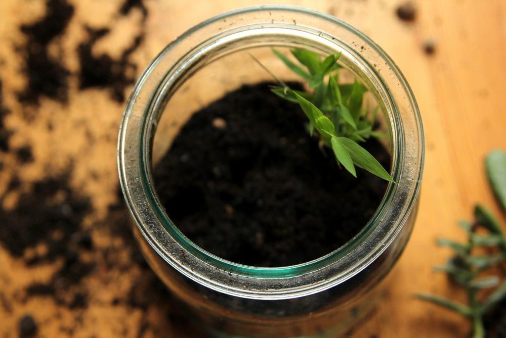 Dzikie Twory - wsadzenie roślinek do ziemi